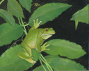 frog_painting_scan.png